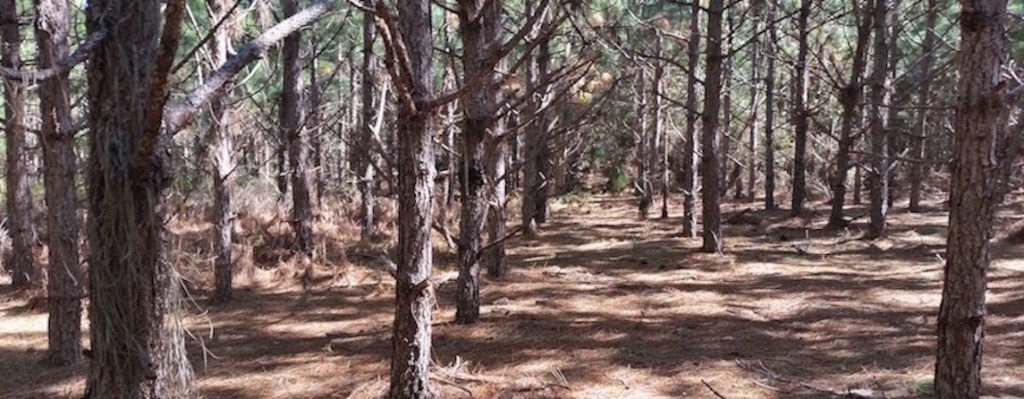 sesm-naked-plantation-1-small-long-copy
