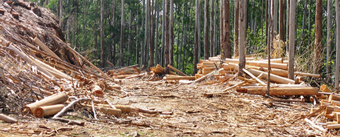 LISTEN: The Latest on Genetically Engineered Trees From 'Post Carbon Radio'